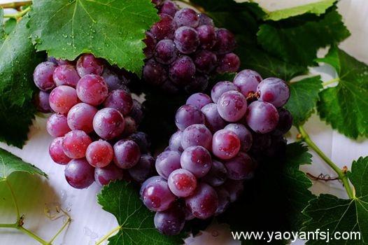 葡萄上的白霜是农药残留?