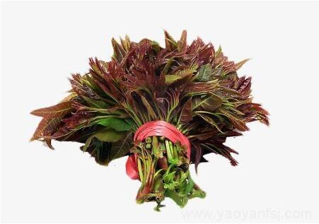 香椿(芽)简单食用就会中毒、致癌