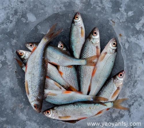 生吃鱼胆能清肝明目和消火
